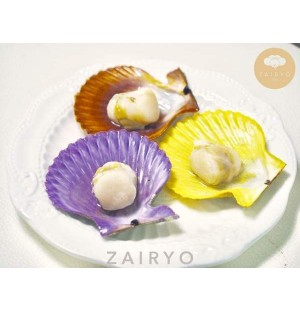 Live Fresh Hiogigai (Eihime Prefecture) / Noble Scallops 日扇貝