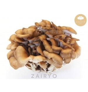 Maitake Mushrooms / 舞茸 (まいたけ)