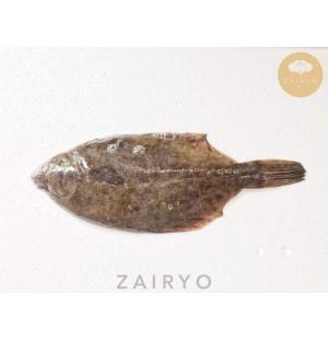 Makogarei (Flat Fish) / マコガレイ