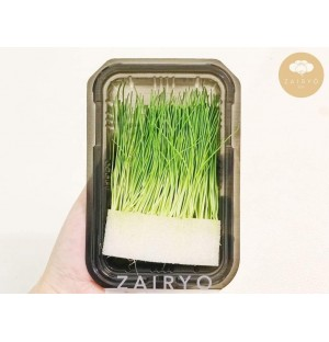 Menegi (Green Onion Bud) / 芽ネギ