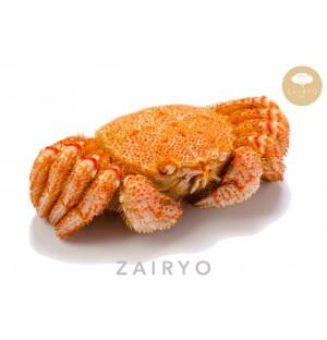 Live Kegani (Horsehair Crab) / 毛蟹